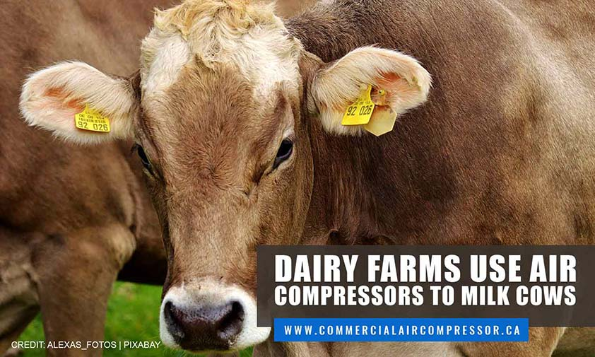 Dairy farms use air compressors to milk cows